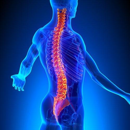 La chirurgia vertebrale